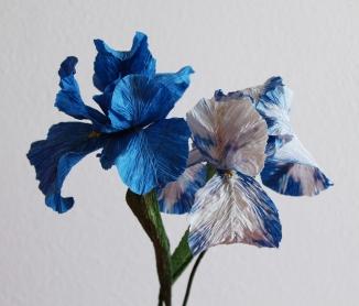 iris blu e bianco